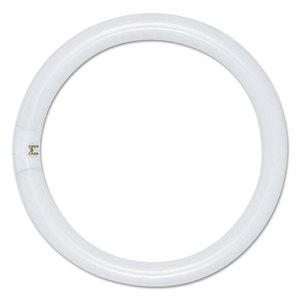 Satco SDNS6500 Circleline Fluorescent Tube, 22 Watts